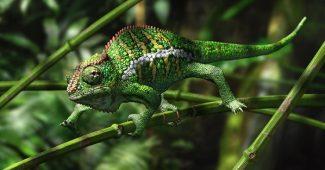 the-chameleon-effect